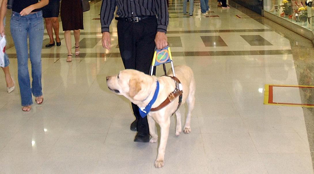 Na środku zdjęcia znajduje się pies asystent, którego trzyma jego właściciel.