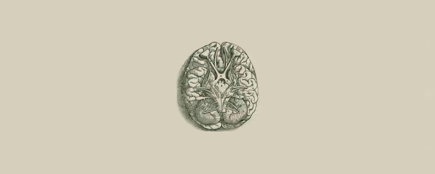 Rycina autorstwa Andreasa Vesalis'a pochodząca z XVI wieku, pokazująca podstawę mózgu.