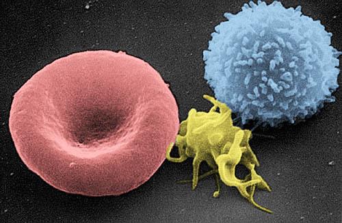 Grafika przedstawiająca erytrocyt, trombocyt i leukocyt
