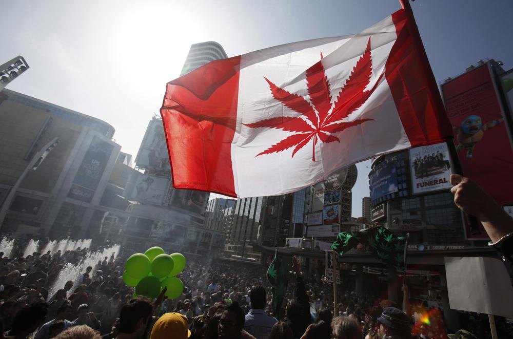 Zdjęcie przedstawia ludzi trzymajacych kanadyjską flagę, z czerwonym liściem marichuany zamiast liścia klonowego, na tle ulic Toronto.