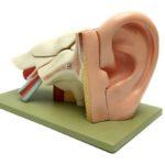 model sztucznego ucha