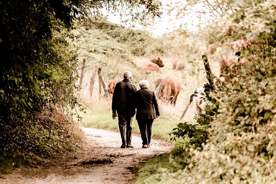 zdjęcie przedstawia parę seniorów (kobietę i mężczyznę). Spacerują przez las, trzymają się za ręce, zwróceni są tyłem do aparatu, zdjęcie jest nostalgiczne i wprawia w zadumę, w oddali na łące widać brązowe krowy